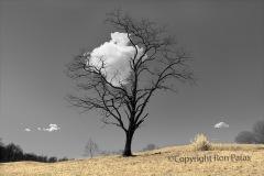 Cloud Catcher #1, Ron Paras, 40x26