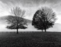 Three Trees, Ron Paras, 22x16