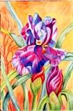 Purple Iris, Benita Rauda Gowen, watercolor