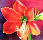 Red Amarylis, Benita Rauda Gowen, watercolor