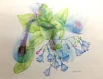 Virginia Bluebells, Ann Currie, Colored Pencil on Watercolor monoprint,