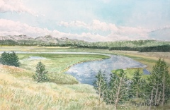 Hayden Valley, Yellowstone National Park, Phyllis Northup