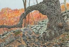 Gateway to Mary's Rock, Shenandoah National Park, Phyllis Northup