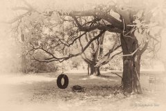 Backyard, Raymond Boc