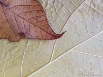 Fall Leaves, Joyce Harman