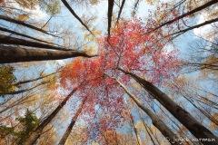 Look Up Fall, Joyce Harman