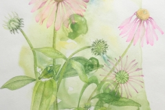 Cone Flowers, Ann Currie, colored pencil on watercolor monoprint