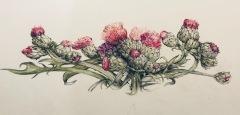Thistle Illustration, Margaret Rogers