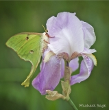 Luna Iris, Michael Sage