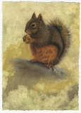 Douglas Squirrel, Lori Wallace-Floyd, oil on canvas