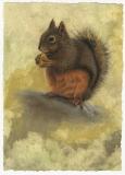 Douglas Squirrel, Lori Wallace-Floyd, oil on canvas