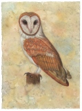 Barn Owl 2, Lori Wallace-Floyd, oil on canvas